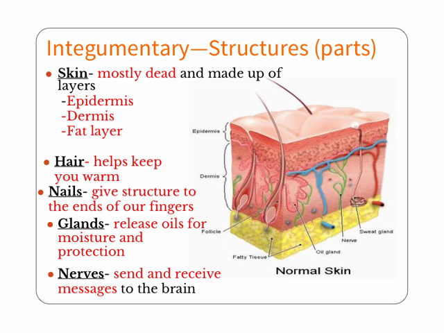 Structure and function of the skin essay